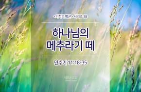 2017-08-27 주일설교 - 하나님의 메추라기 떼