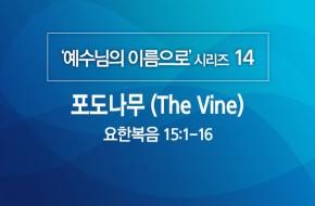 2020-06-07 포도나무 (The Vine)
